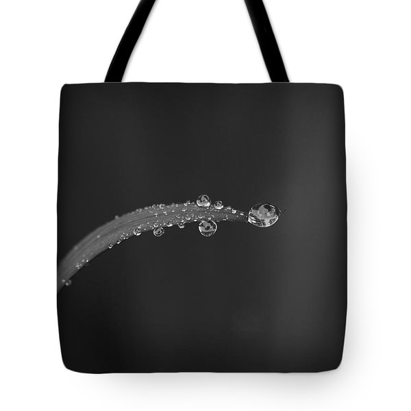 After The Rain Bw Tote Bag