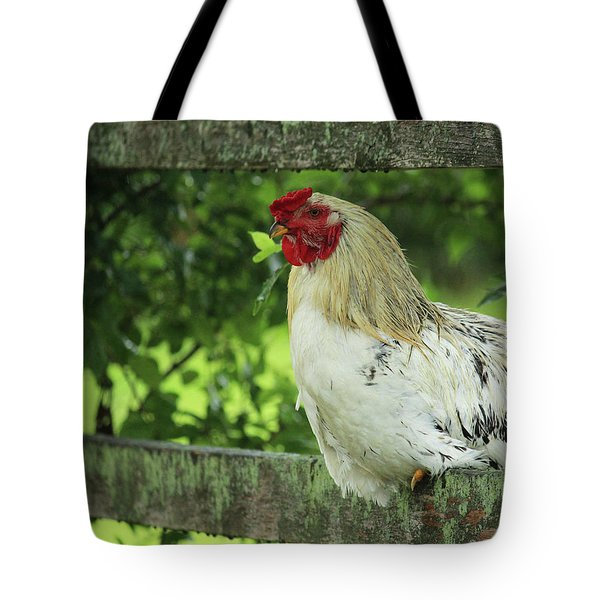 Afternoon Siesta Tote Bag