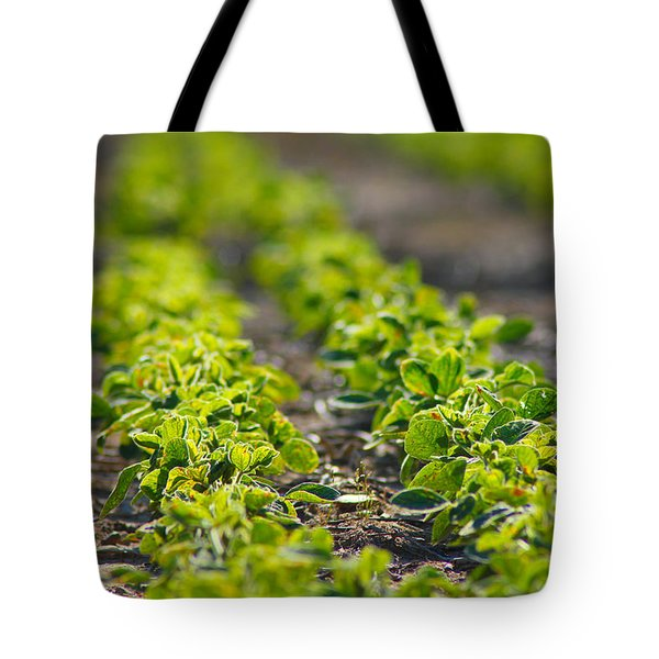 Agriculture- Soybeans 1 Tote Bag