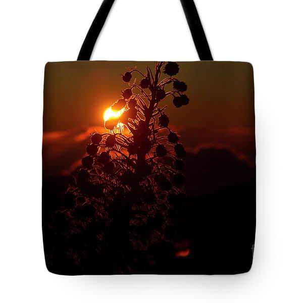 Ahinahina - Silversword - Argyroxiphium Sandwicense - Sunrise Tote Bag by Sharon Mau