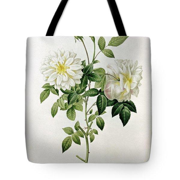Aime Vibere Tote Bag