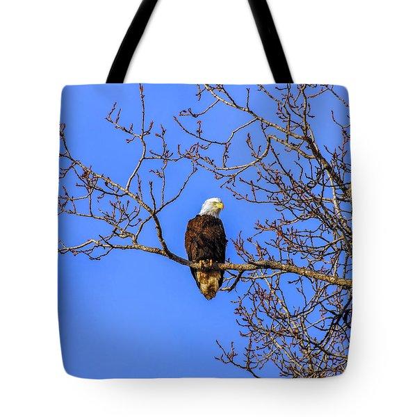 Alaskan Bald Eagle In Tree At Sunset Tote Bag