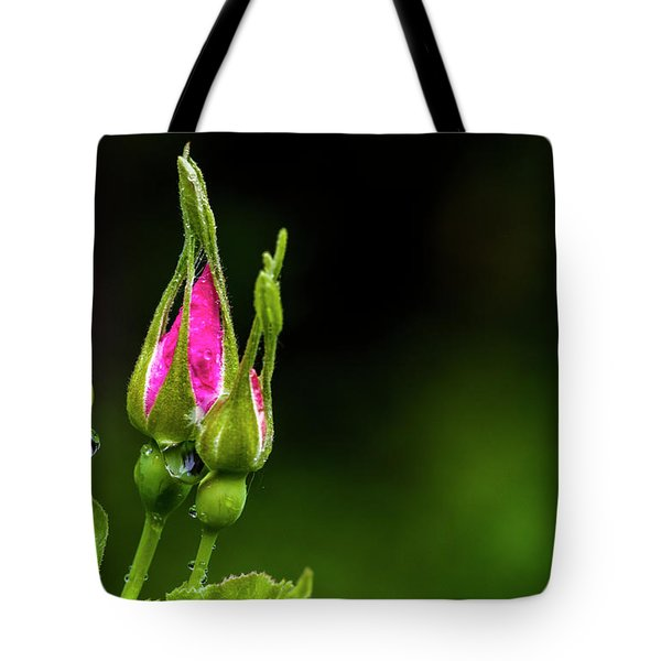 Tote Bag featuring the photograph Alberta Rose Buds by Darcy Michaelchuk