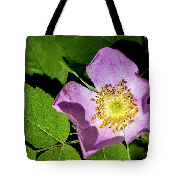 Tote Bag featuring the photograph Alberta Wild Rose Opens For Early Sun by Darcy Michaelchuk