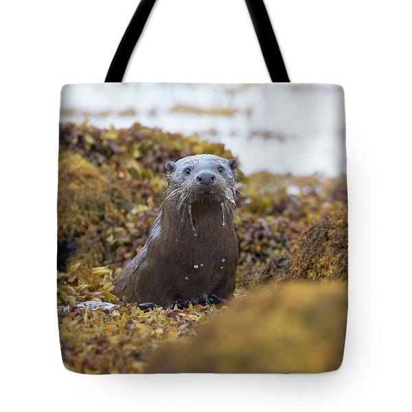 Alert Female Otter Tote Bag