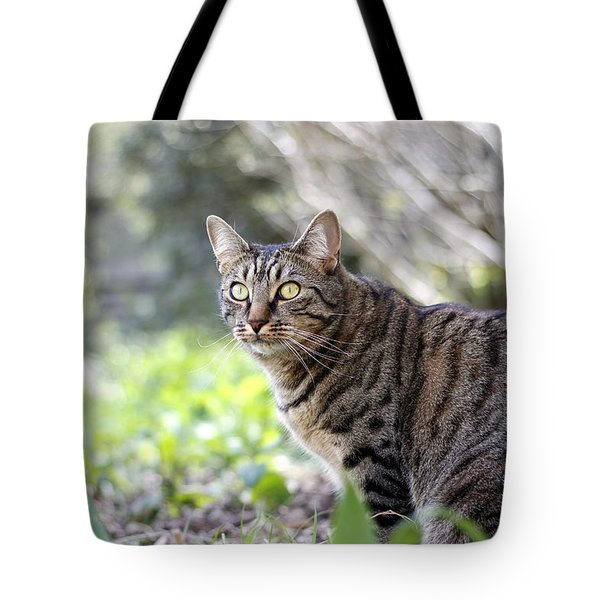 Tote Bag featuring the photograph Alert by Helga Novelli