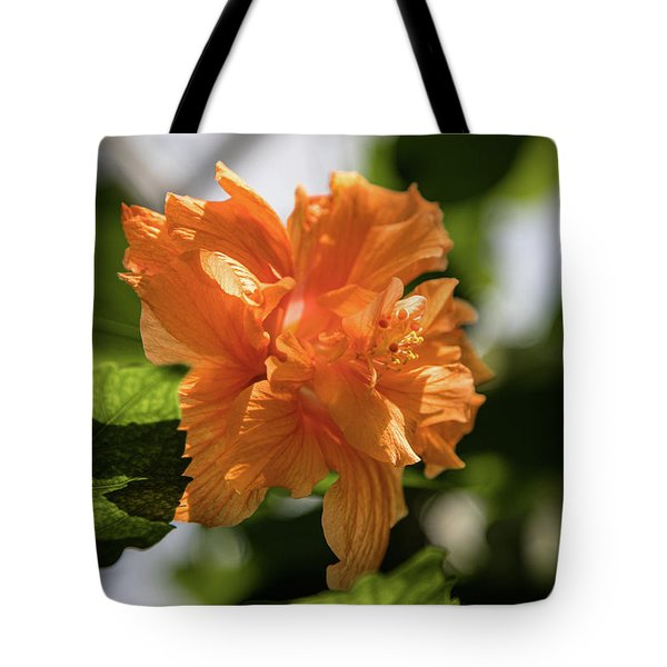Allan Gardens Orange Tote Bag