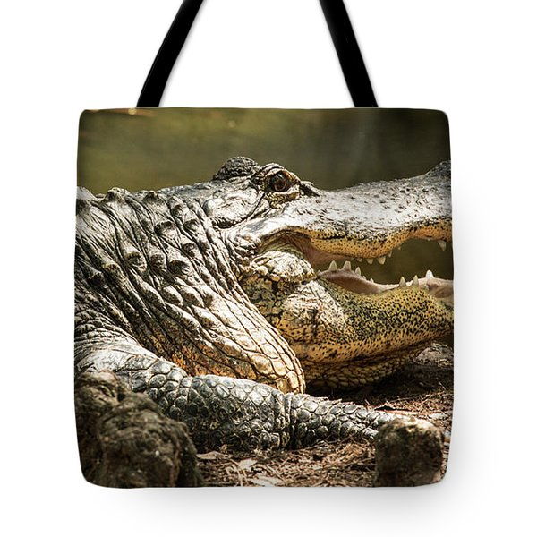 Tote Bag featuring the photograph Alligator At Lowry Park Zoo by Richard Goldman