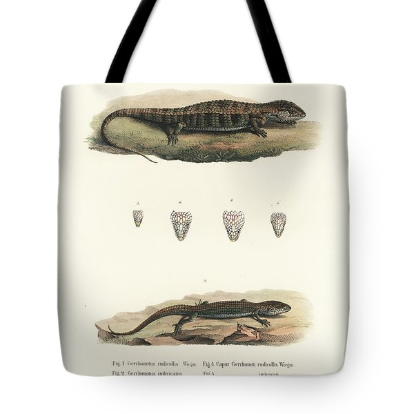 Alligator Lizards From Mexico Tote Bag