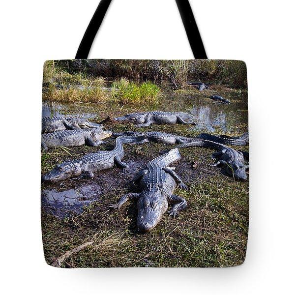 Alligators 280 Tote Bag