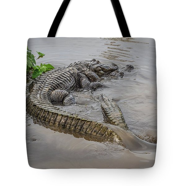 Alligators Courting Tote Bag