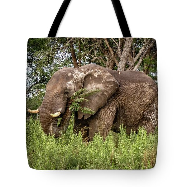 Tote Bag featuring the photograph Alpha Male Elephant by Gregory Daley  PPSA