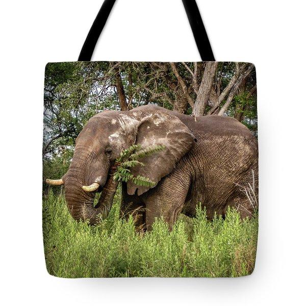 Alpha Male Elephant Tote Bag