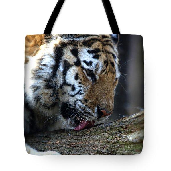 Always A Cat Tote Bag by Karol Livote