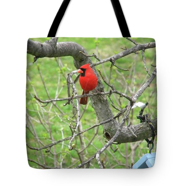 Always With Us -cardinals Tote Bag