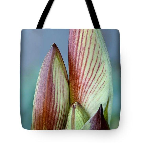 Amaryllis Buds Tote Bag