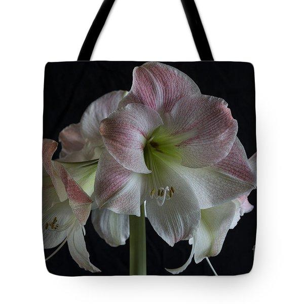 Amaryllis Full Bloom Tote Bag