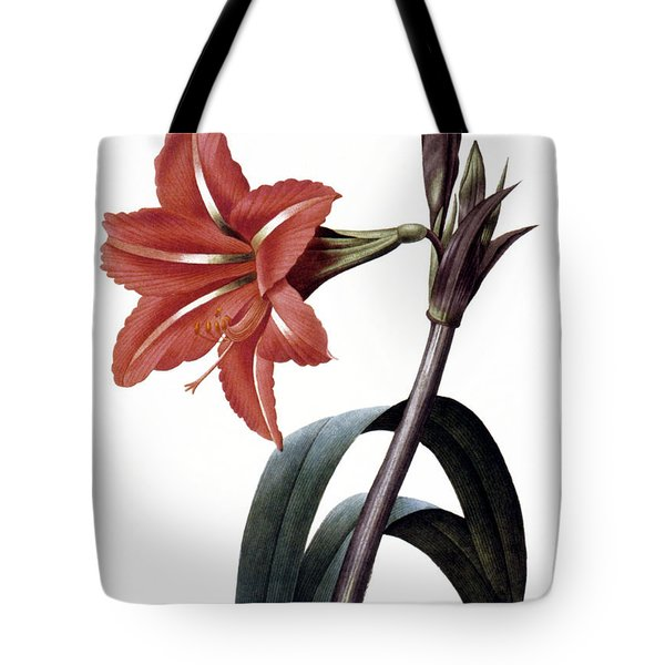 Amaryllis Tote Bag by Granger