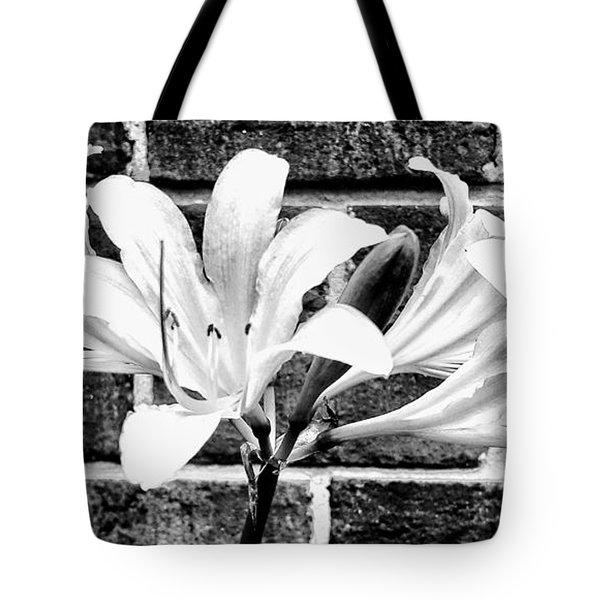 Amaryllis Inspiration Tote Bag