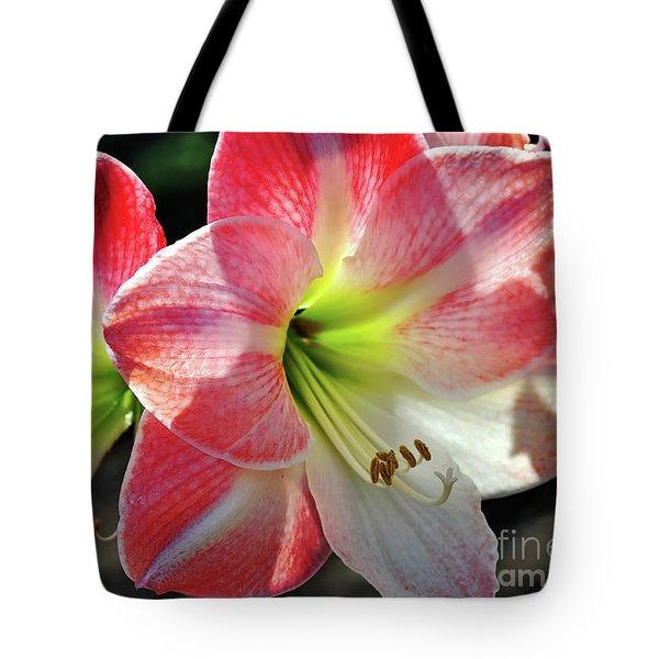 Amaryllis Tote Bag by Kaye Menner