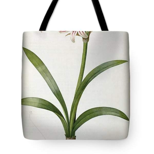 Amaryllis Vittata Tote Bag by Pierre Redoute