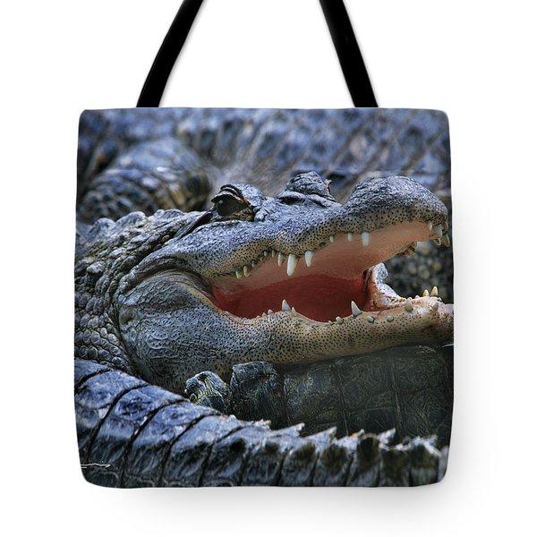 American Alligators Tote Bag