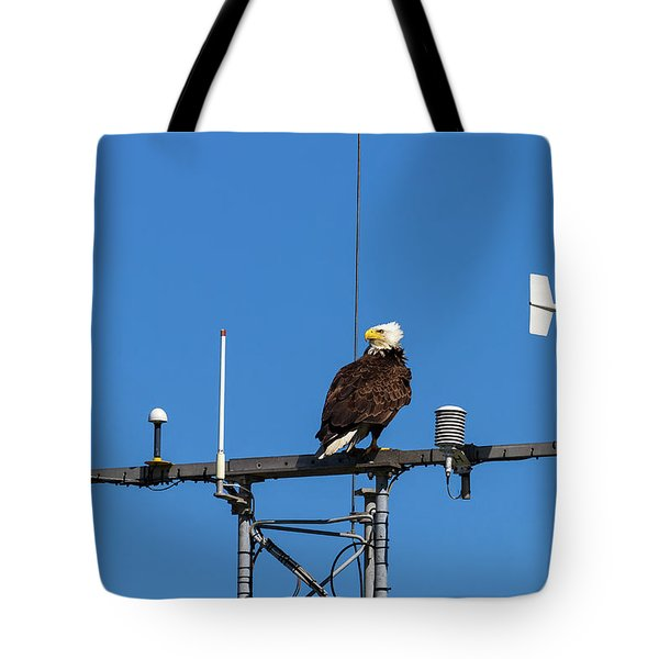 American Bald Eagle Perched On Communication Tower Tote Bag by David Gn