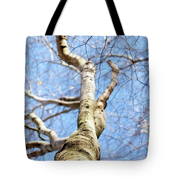 Tote Bag featuring the photograph American Beech Tree by Christina Rollo