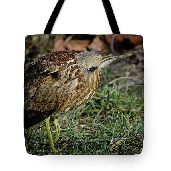 Tote Bag featuring the photograph American Bittern by Douglas Stucky