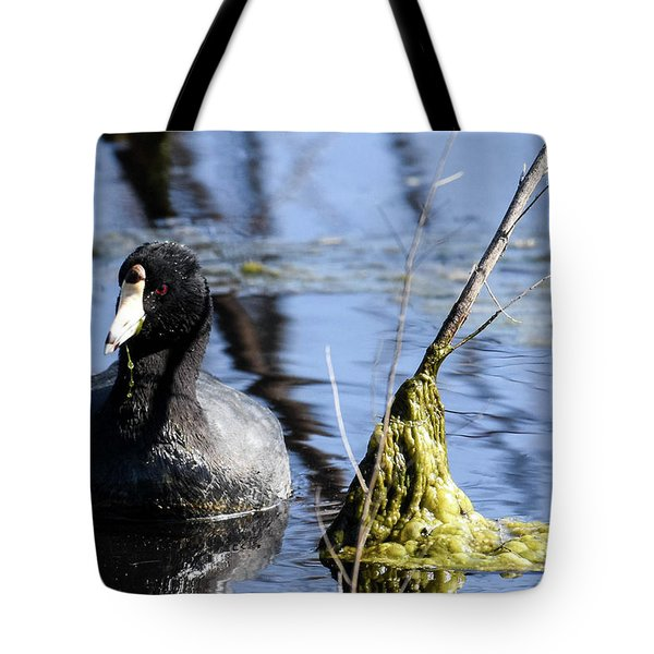 Tote Bag featuring the photograph American Coot by Gary Wightman