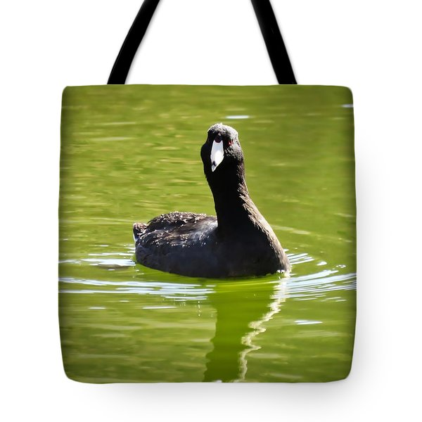 American Coot Portrait Tote Bag