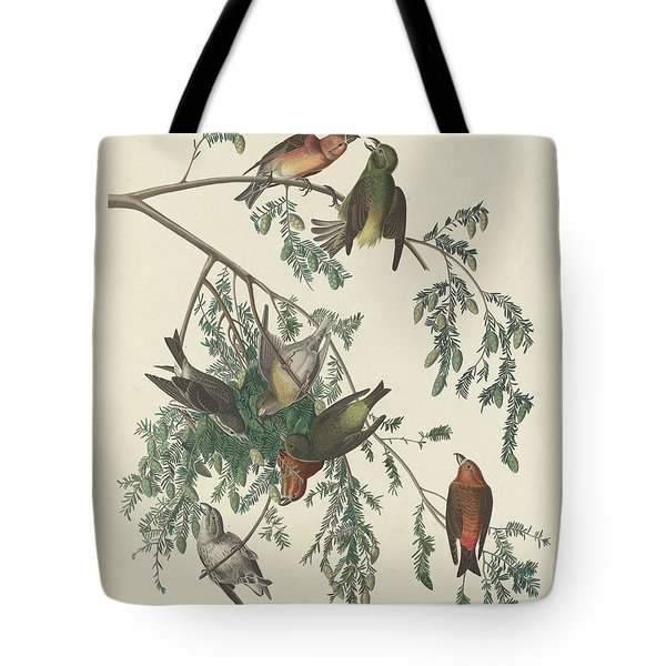 American Crossbill Tote Bag by Rob Dreyer