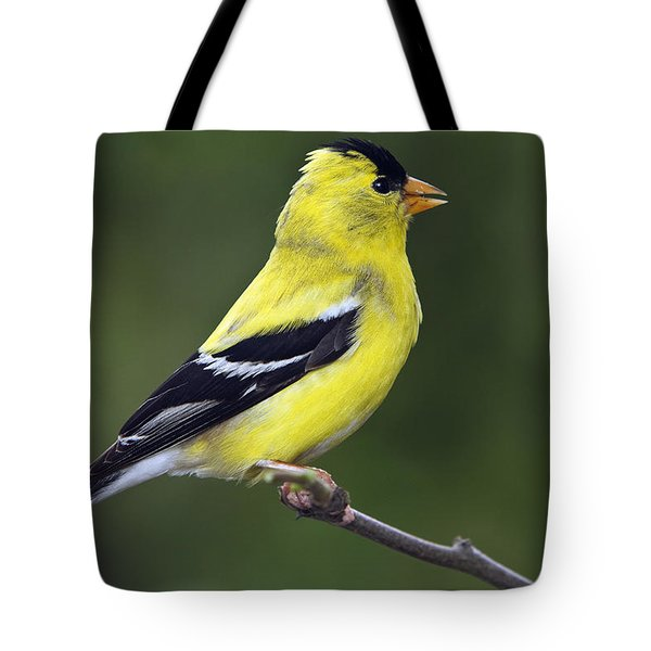 Tote Bag featuring the photograph American Golden Finch by William Lee