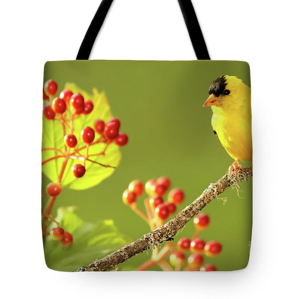 American Goldfinch Among Red Berries Tote Bag