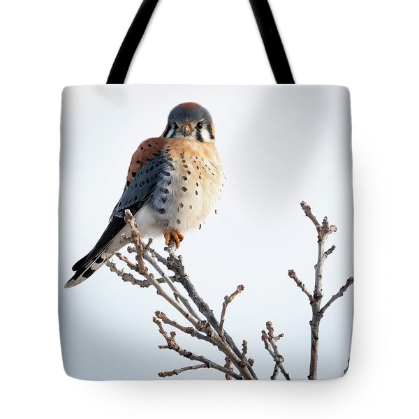 American Kestrel At Bender Tote Bag