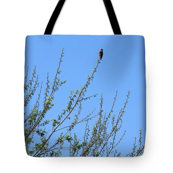 American Kestrel Atop Pecan Tree Tote Bag