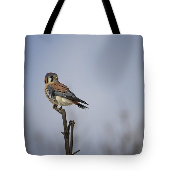 American Kestrel Tote Bag by Gary Hall