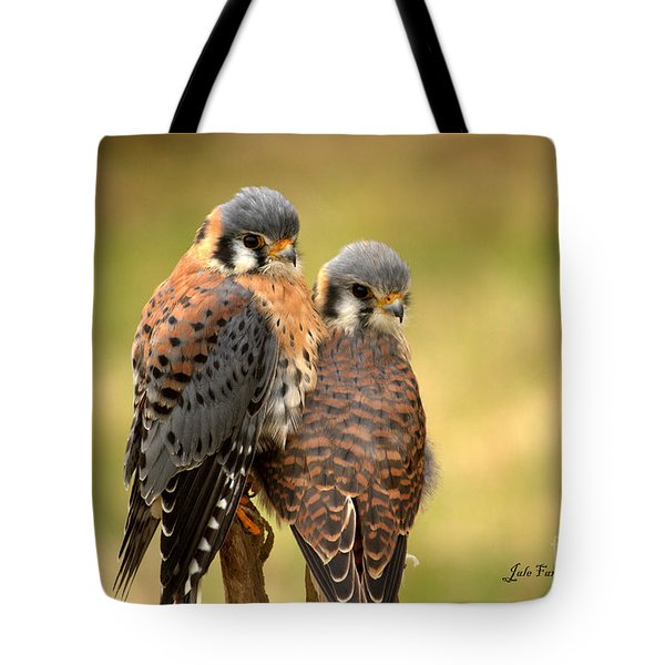 American Kestrel Siblings Tote Bag