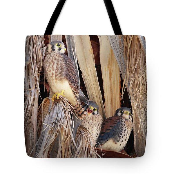 American Kestrels Tote Bag