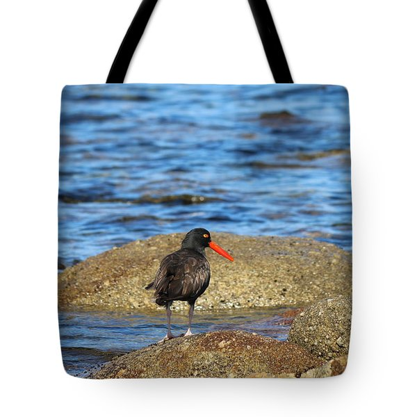 American Oystercatcher  Tote Bag