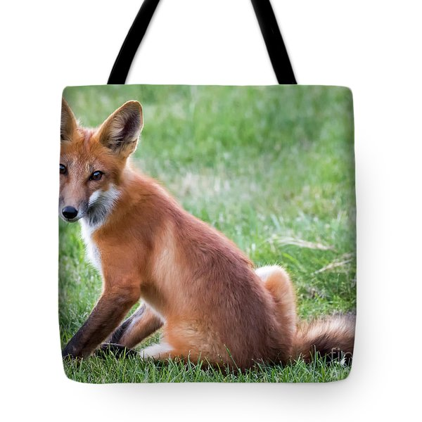 American Red Fox  Tote Bag