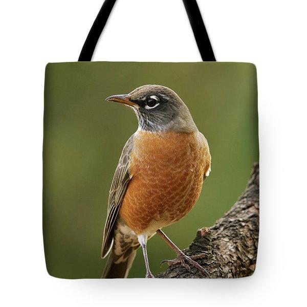 American Robin Tote Bag by Doug Herr