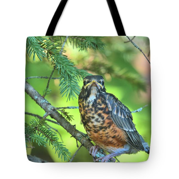 Tote Bag featuring the photograph American Robin Fledgling by Debbie Stahre