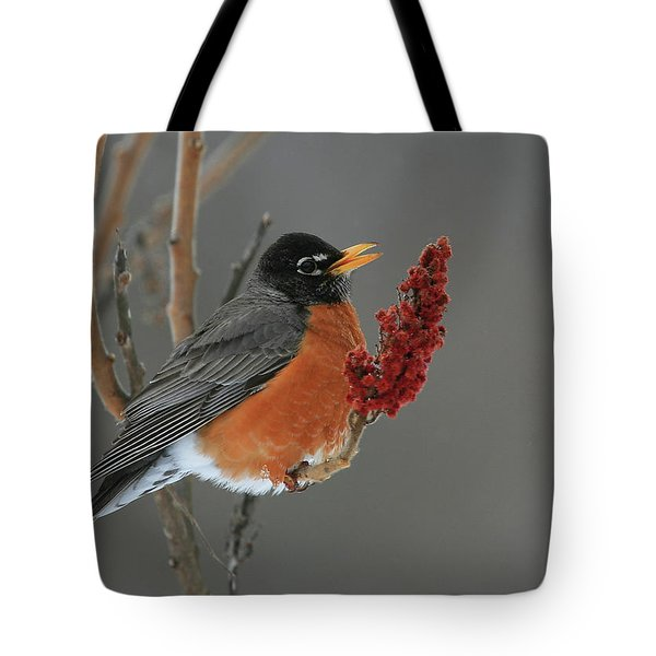 American Robin On Sumac Tote Bag