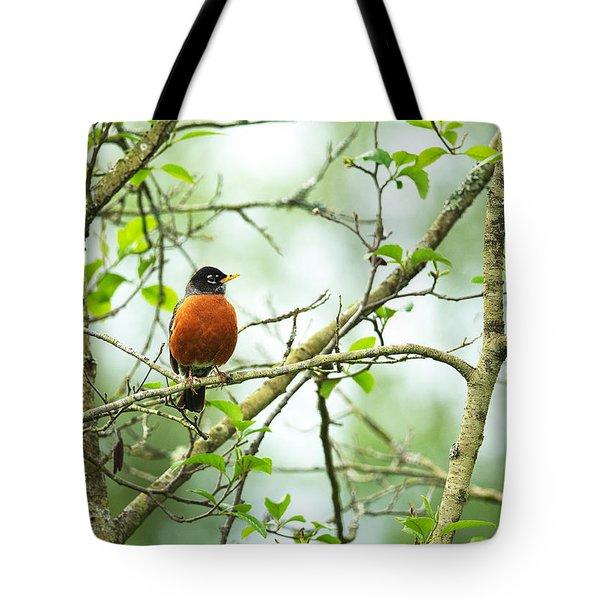 American Robin On Tree Branch Tote Bag