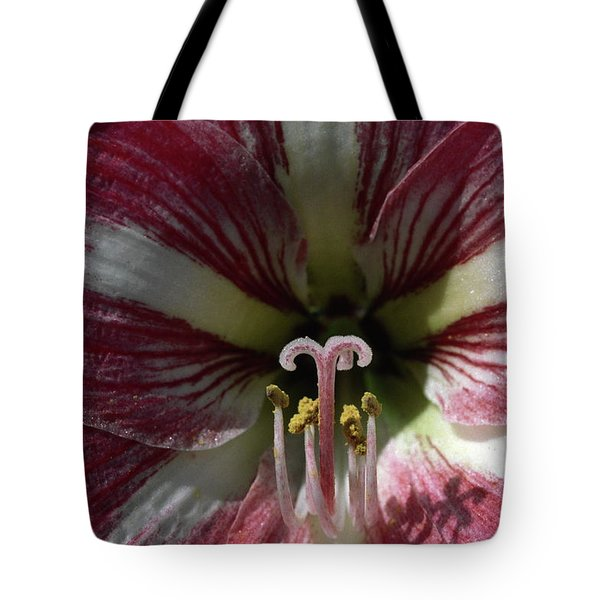 Amaryllis Flower Close-up Tote Bag by Sally Weigand