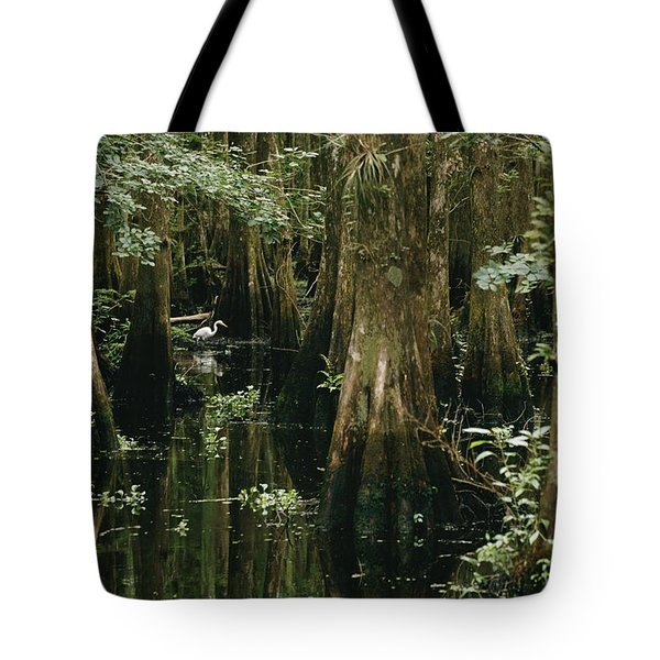 An Egret Stalks Fish In A Cypress Tree Tote Bag