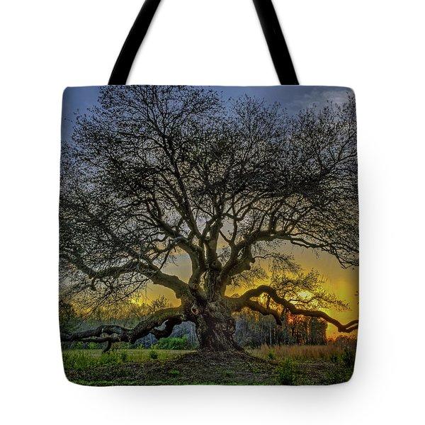 Ancient Live Oak Tree Tote Bag