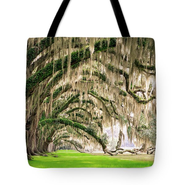 Ancient Southern Oaks Tote Bag
