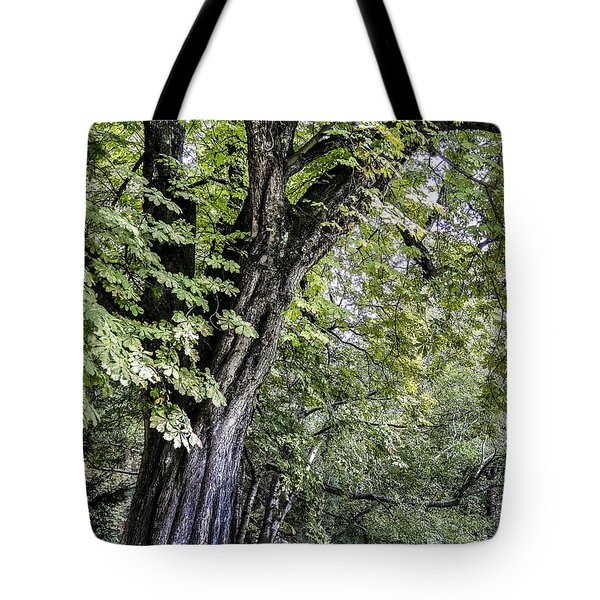 Ancient Tree Luxembourg Gardens Paris Tote Bag by Sally Ross